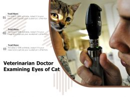 Veterinarian Doctor Examining Eyes Of Cat