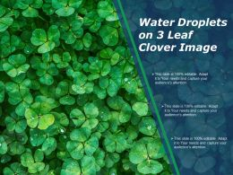 Water Droplets On 3 Leaf Clover Image
