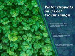 Water Droplets On 3 Leaf Clover Image