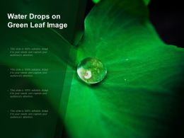 Water Drops On Green Leaf Image
