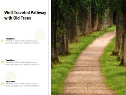 Well Traveled Pathway With Old Trees