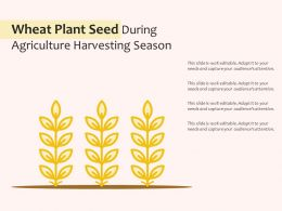 Wheat Plant Seed During Agriculture Harvesting Season