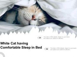 White Cat Having Comfortable Sleep In Bed