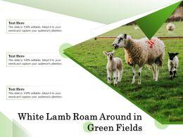 White Lamb Roam Around In Green Fields