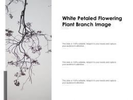 White Petaled Flowering Plant Branch Image