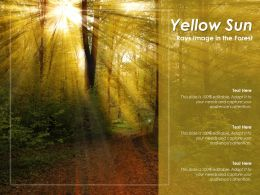 Yellow Sun Rays Image In The Forest
