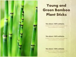 Young And Green Bamboo Plant Sticks