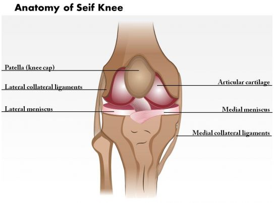 0514 Anatomy of Seif Knee Medical Images For PowerPoint | PowerPoint ...