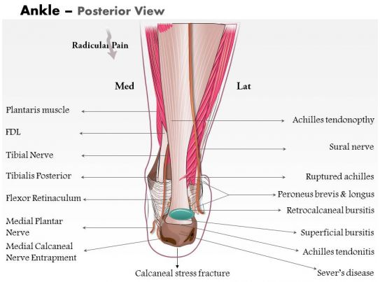 0514 Ankle Posterior Medical Images For Powerpoint