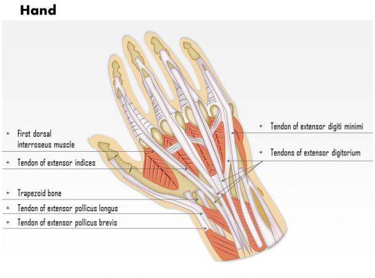 Hand Dorsal Medical Images For Powerpoint Slide