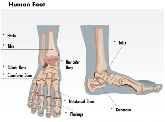 0514 Human Foot Medical Images For Powerpoint Powerpoint Slide