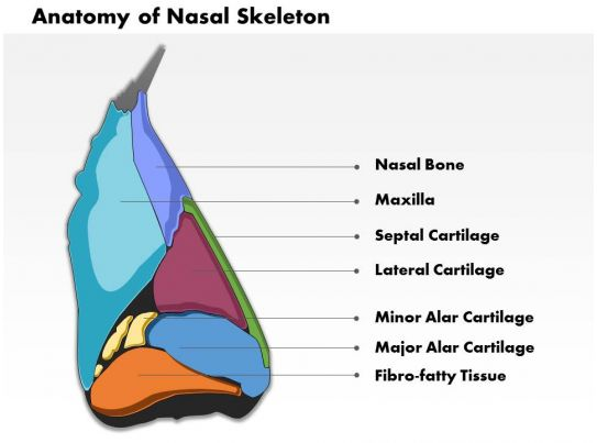 0514 lateral view of external nose anatomy of nasal skeleton medical ...
