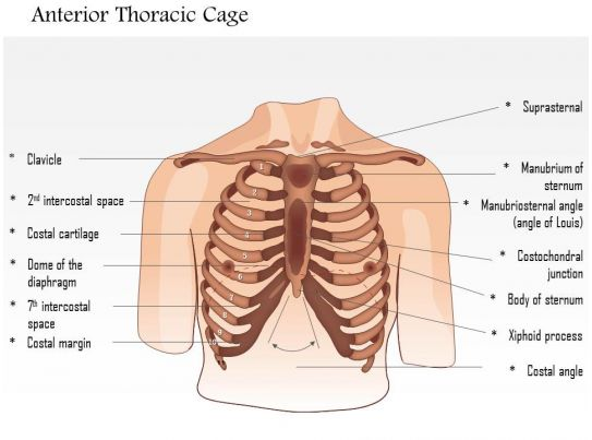 0514 Male chest wall anterior View Medical Images For PowerPoint ...