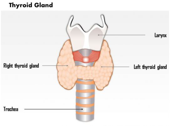 0514 thyroid gland Medical Images For PowerPoint ...