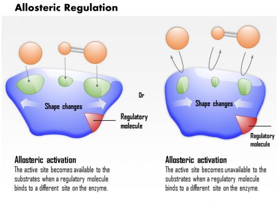 0614 Allosteric Regulation Medical Images For Powerpoint