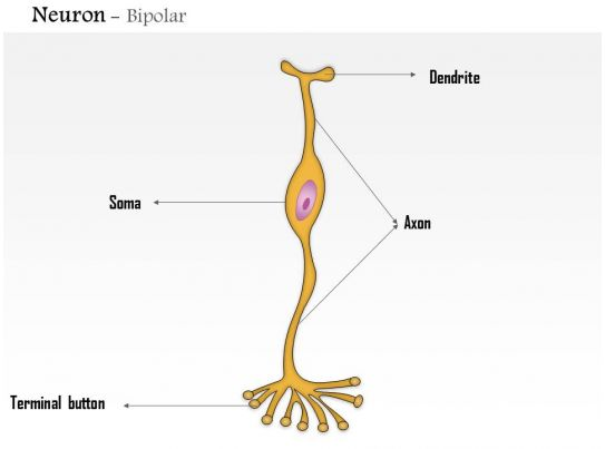 0614 neuron bipolar medical images for powerpoint