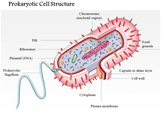 0614 Prokaryotic Cell Structure Medical Images For ...  0614 Prokaryoti...