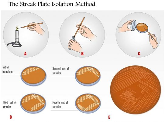 0614 The Streak Plate Isolation Method Medical Images For