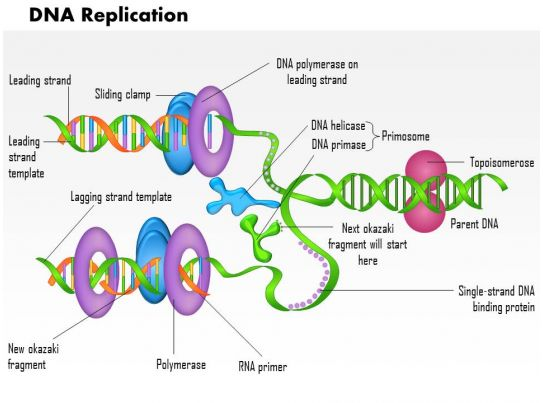 0814 DNA Replication Medical Images For Powerpoint