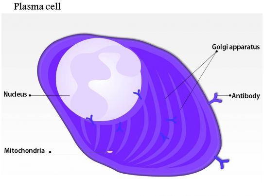 0814 Structure Of The Plasma Cell Medical Images For Powerpoint