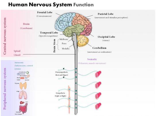 20107065 Style Medical 3 Neuroscience 1 Piece Powerpoint