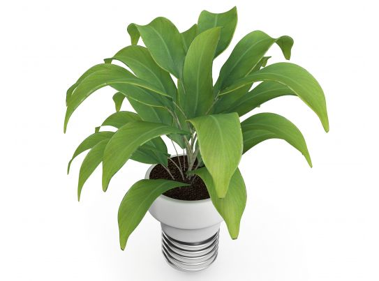 3d Plant On White Background Stock Photo Powerpoint