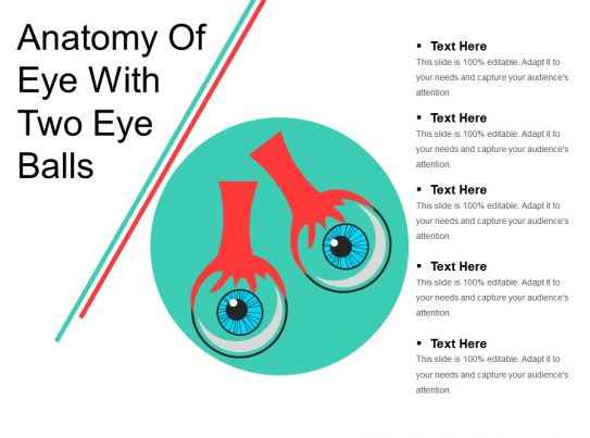 Anatomy Of Eye With Two Eye Balls Presentation Powerpoint Images