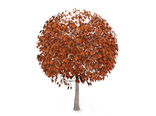 autumn tree with brown color leaves stock photo