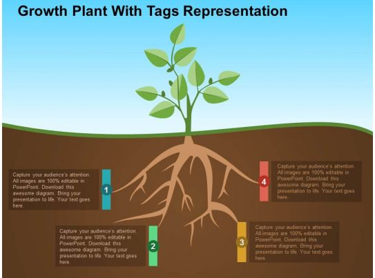 growth plant with tags representation flat powerpoint