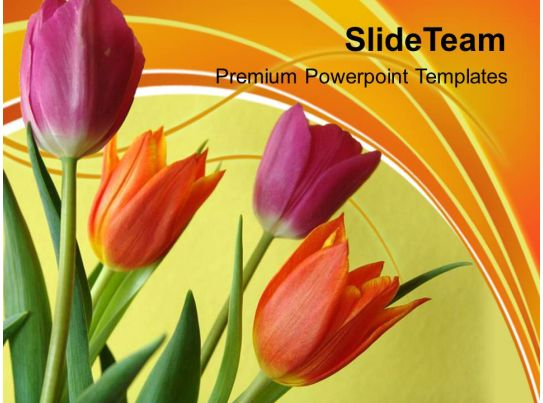 illustration of colorful tulip flowers powerpoint