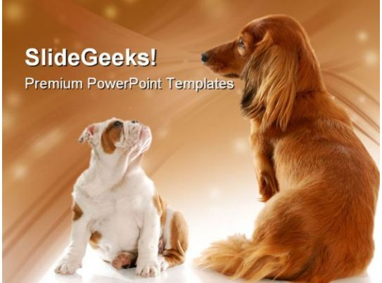 bull dog puppy and dachshund animals powerpoint templates