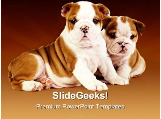 Bulldog Puppies Animals Powerpoint Templates And Powerpoint