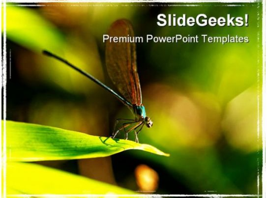 Insect Macro Laos Animals Powerpoint Templates And