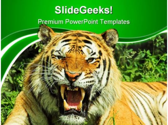 tiger snarl animals powerpoint templates and powerpoint