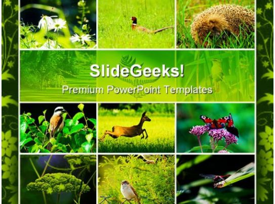 frog animals powerpoint templates and powerpoint backgrounds, Powerpoint