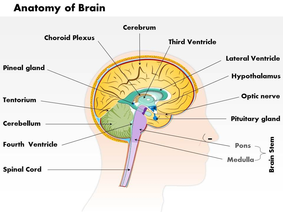 0514 Anatomy Of Brain Medical Images For Powerpoint