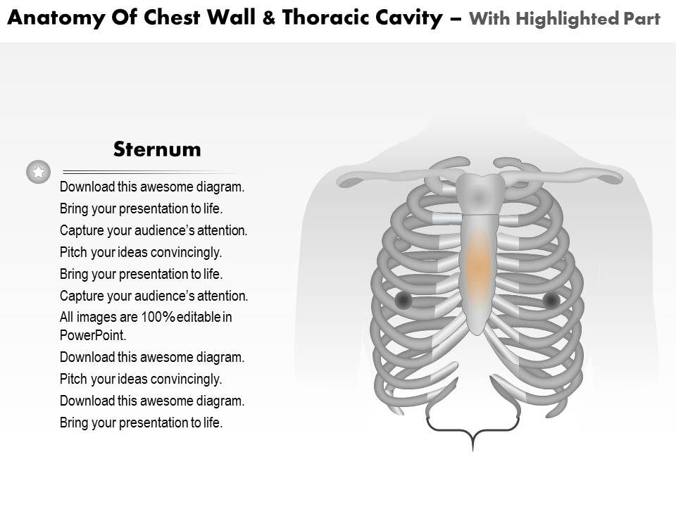 0514 anatomy of chest wall and thoracic cavity medical images for 0514anatomyofchestwallandthoraciccavitymedicalimagesforpowerpointslide06 ccuart Choice Image