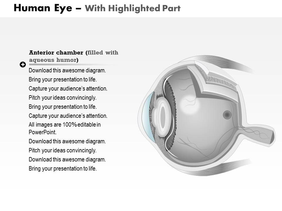 0514 Anatomy Of Human Eye Medical Images For PowerPoint | PowerPoint ...