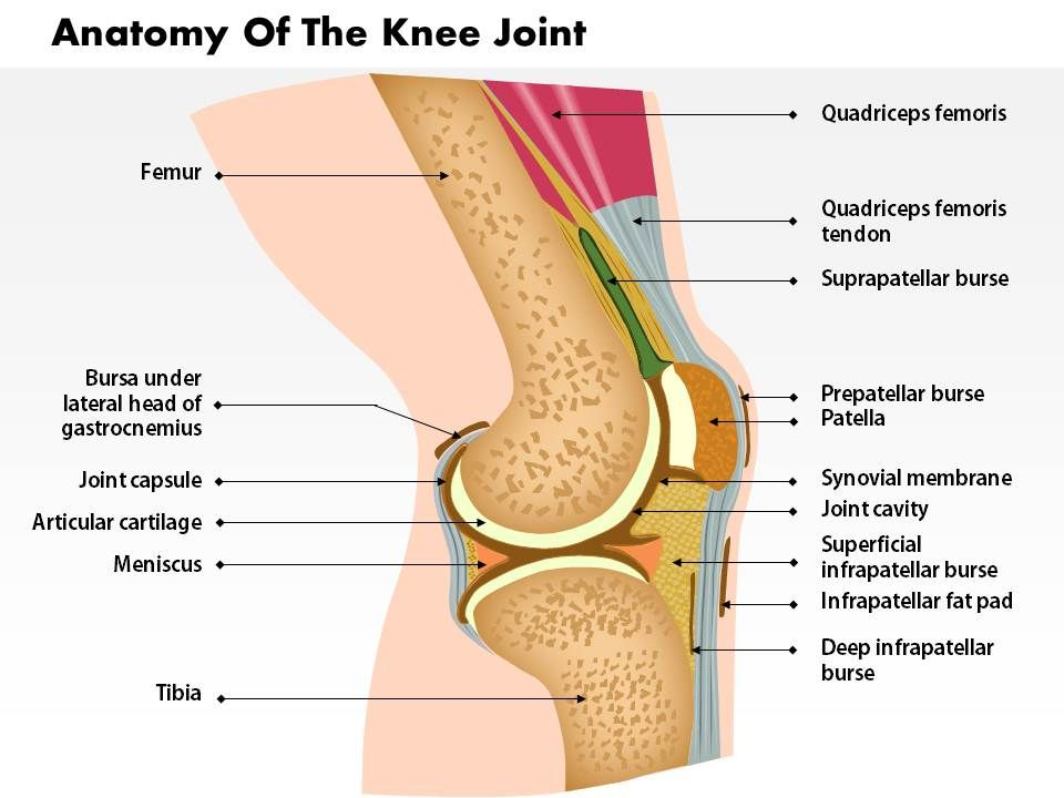 0514 Anatomy Of Knee Joint Medical Images For Powerpoint Slide01