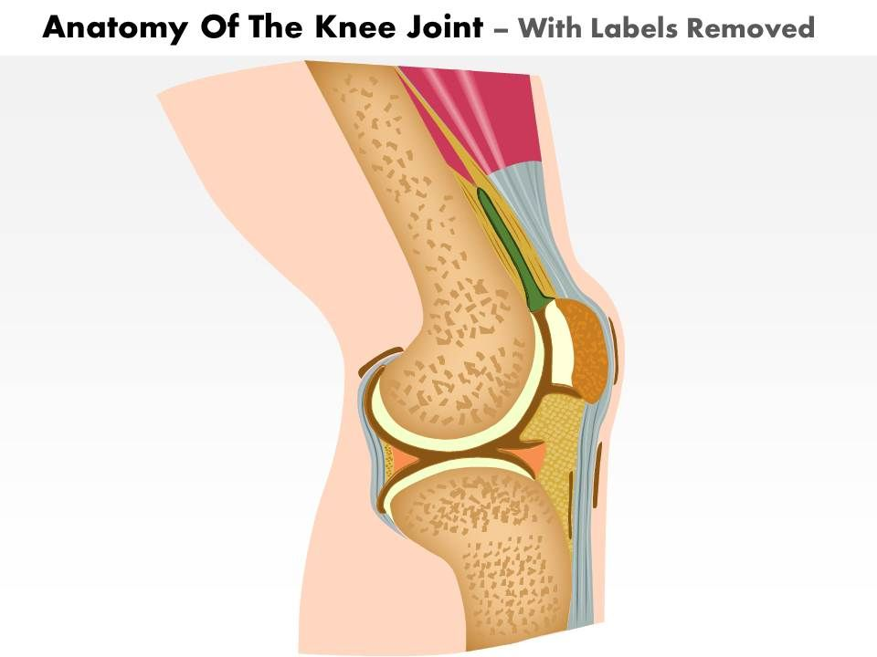0514 anatomy of knee joint medical images for powerpoint Slide02