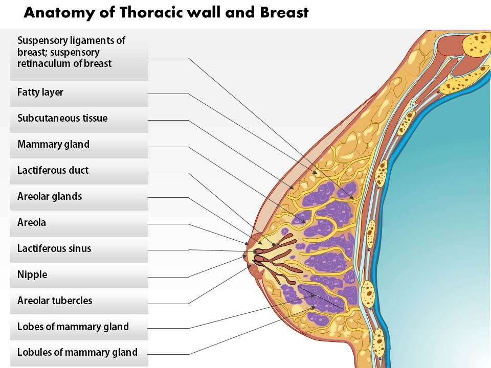 0514_anatomy_of_thoracic_wall_and_breast_Slide01