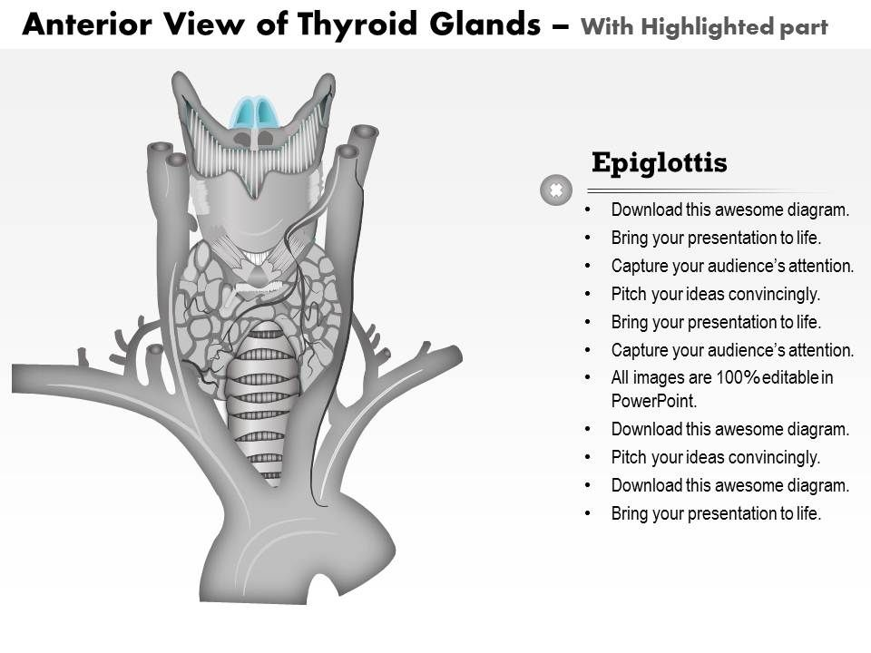 0514 Anatomy Of Thyroid Glands Anterior View Graphics Presentation Background For Powerpoint Ppt Designs Slide Designs