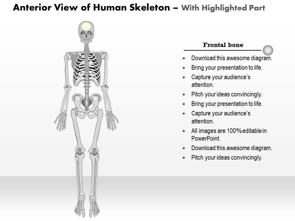 0514 Anterior View Of The Human Skeleton Medical Images For