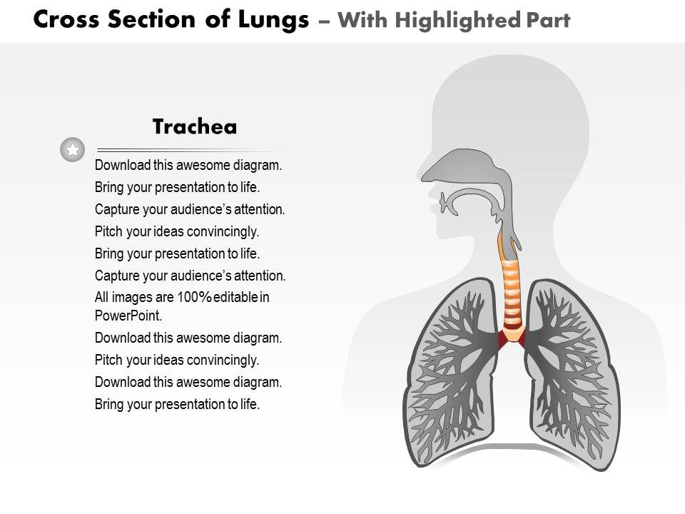 0514 Cross Section Of Lungs Human Anatomy Medical Images For
