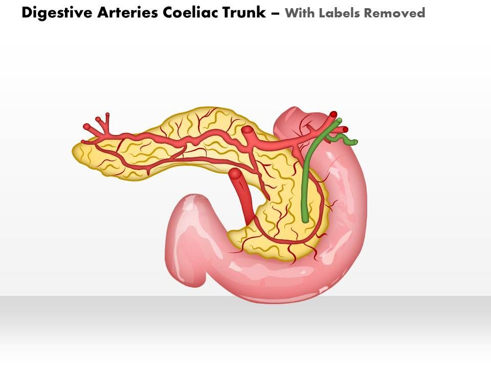 0514 digestive arteries celiac trunk medical images for powerpoint ...