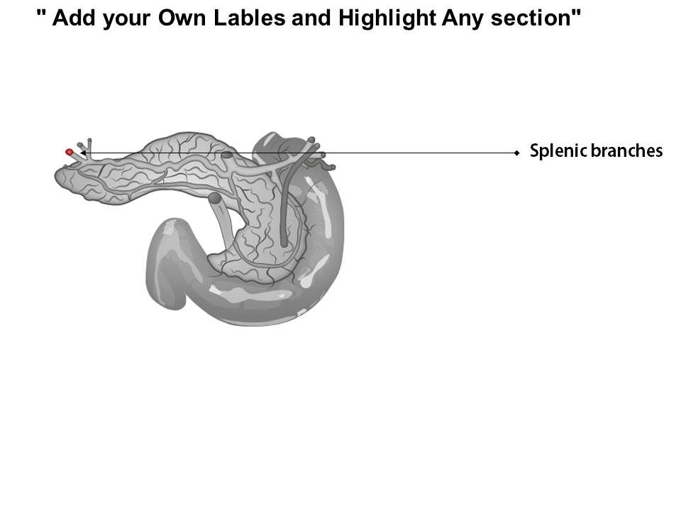0514 digestive arteries celiac trunk medical images for