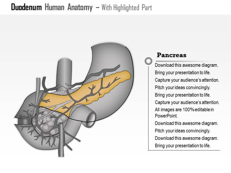 0514 duodenum human anatomy medical images for powerpoint Slide06