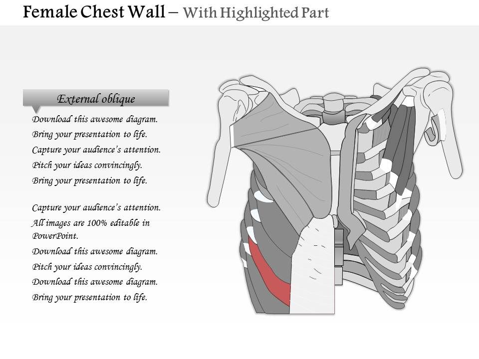 0514 female chest wall anterior view medical images for powerpoint 0514femalechestwallanteriorviewmedicalimagesforpowerpointslide06 0514femalechestwallanteriorviewmedicalimagesforpowerpointslide07 ccuart Gallery