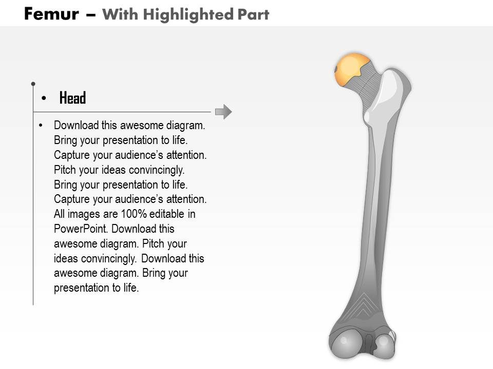 0514 Femur Posterior View Medical Images For PowerPoint ...