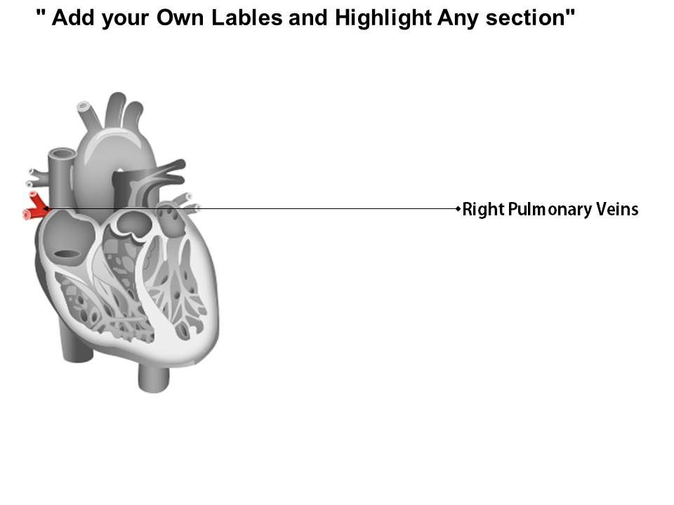 0514 heart human anatomy medical images for powerpoint